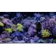 Moai Plus Aquarium