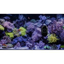 Moai Aquarium